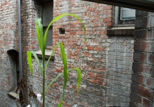 'Fresh Starts, From My Window Series,' 2011 photo by Catherine Herrera 2011 1 of 1