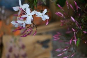 'Humu and Jasmine, From My Window Series' 2011 photo by Catherine Herrera 2011 1 of 1
