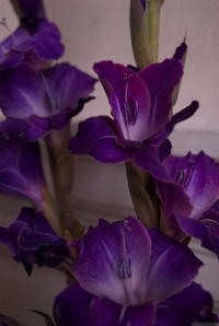 'Purple, From My Window Series, photo by Catherine Herrera 2011 13 of 18