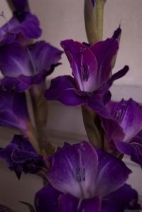 'Purple, From My Window Series, photo by Catherine Herrera 2011 13 of 18