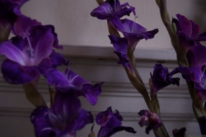 'Purple, From My Window Series, photo by Catherine Herrera 2011 14 of 18