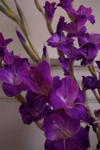 'Purple, From My Window Series, photo by Catherine Herrera 2011 16 of 18