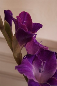 'Purple, From My Window Series, photo by Catherine Herrera 2011 18 of 18