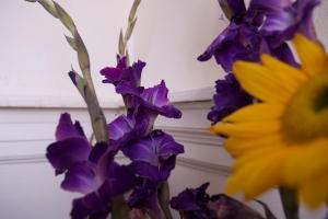 'Purple, From My Window Series, photo by Catherine Herrera 2011 2 of 18