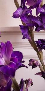 'Purple, From My Window Series, photo by Catherine Herrera 2011 4 of 18