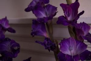 'Purple, From My Window Series, photo by Catherine Herrera 2011 9 of 18